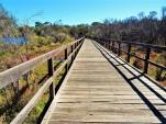 swan-river-wetlands
